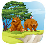 Bears Stock Photos
