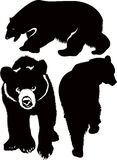 Bears white brown animals. Illustration royalty free illustration