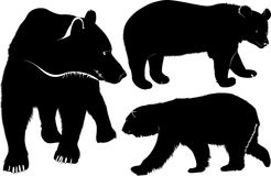 Bears. Wild mammal bears vector isolated on white background Stock Image
