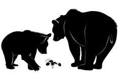 Bears. Wildlife mammal  wild nature animal silhouette Royalty Free Stock Photo