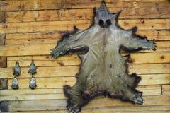 Bearskin протягиванный на стене стоковая фотография