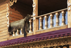 Bearskin on the balcony. Royalty Free Stock Photography