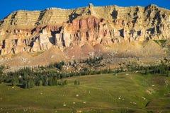Beartooth小山在清早光的蒙大拿 免版税图库摄影