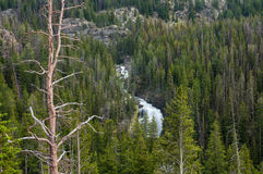 Beartooth Falls Royalty Free Stock Photos