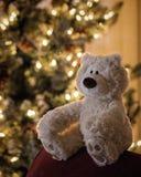 Beary-Weihnachten Lizenzfreies Stockbild