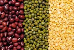 beas的混合 免版税库存图片