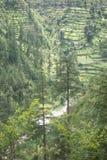 Beas Valley. Himachal Pradesh, India, step farming alongside the beas river royalty free stock image
