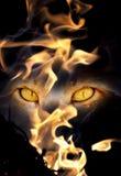 Beast eyes. Fiery beast eyes in deadly looks Stock Photo