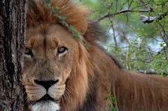 The Beast royalty free stock photos