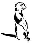 Beast meerkat stands Carnivora Stock Images