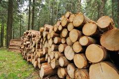 Beaten spruce Stock Photo