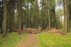 Beaten spruce Stock Image