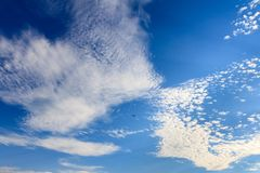 Beatiful blue sky with clouds and bird on a sunny day.  stock photography