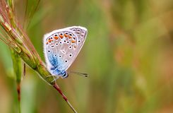 Beatiful butterfly on the flower in nature.  stock photos