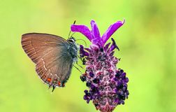 Beatiful butterfly on the flower in nature.  stock images