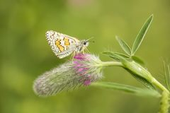Beatiful butterfly on the flower in nature.  royalty free stock photos