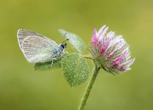 The beatiful butterfly in nature. Butterfly on a spring meadow in nature royalty free stock photo