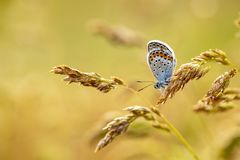 Beatiful butterfly in nature. Close up photo royalty free stock photo