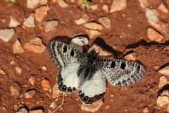 Beatiful butterfly in nature. Wild life natural photo.  stock photos