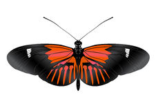 Beatiful Butterfly with open wings Royalty Free Stock Images