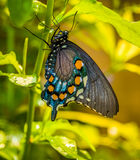 Beatiful butterfly on the plant Royalty Free Stock Photo