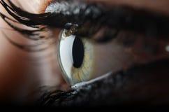 Beatiful eye. Detail photography of human eye royalty free stock images