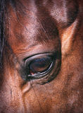 Beatiful eye of the  horse close-up Royalty Free Stock Images
