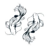 Beatiful fishes ink drawing vector. Koi pisces isolated stock illustration
