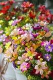 Beatiful flower Stock Photography