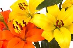 Beatiful flowers Stock Photo