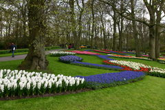 Beatiful flowers Keukenhof, Lisse Stock Photo