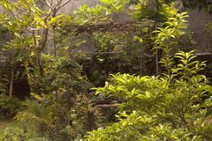 Beatiful garden Royalty Free Stock Photos