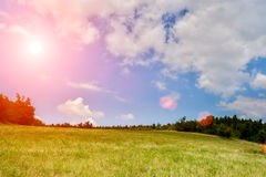 Beatiful grassfield with sunflares. Beatifull grassfield with sunflares. Beatifull clouds in background Royalty Free Stock Photo
