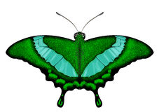 Beatiful Green Butterfly - Papilio palinurus Stock Image