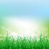 Beatiful green field with blur heaven and sunrise. Ray Stock Images