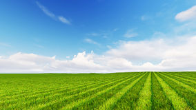 Beatiful green field with cloudy sky 3D render.  Stock Photos