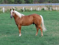 Beatiful horse Stock Images