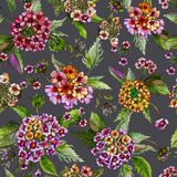 Beatiful lantana flowers with green leaves on grey background. Seamless floral pattern. Watercolor painting. Hand drawn illustration. Can be used as for fabric stock illustration