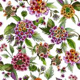 Beatiful lantana flowers with green leaves on white background. Seamless floral pattern. Watercolor painting. Hand drawn illustration. Can be used as for royalty free illustration