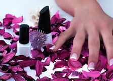 Beatiful nails Royalty Free Stock Photo