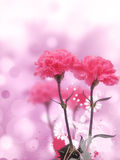 Beatiful Pink Flowers Background Stock Photo