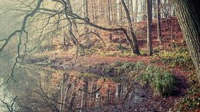 Beatiful Places in a forest. Pictures from a small forest in the North of Germany stock photography