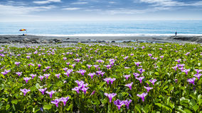 Beatiful pnk flower beside the beach with nice background color royalty free stock photos
