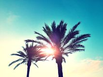 Beatiful Sunny Beach day in Formentera Spain. Royalty Free Stock Images