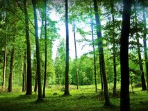 Beatiful tropical forest. This photo shows very beautiful tropical forest Royalty Free Stock Images