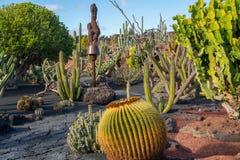 Beatiful View of cactus garden, Jardin de Cactus in Guatiza, Lanzarote, Canary Islands, Spain. A large diversity of cactus plants growing in a beautiful Jardin stock photography