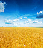 Beatiful view on field of wheat and blue cloudy Stock Photography