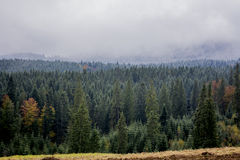 Beatiful view fron the Carpathins. Wood with gloomy weather. Dark green.mountains. Forested mountain slope in low lying cloud with the evergreen conifers stock images