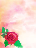 Beatiful watercolour. Beautiful watercolour with rose for your card Stock Photography