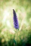 Beatiful wild flower on green meadow Royalty Free Stock Image